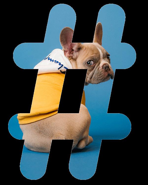 hashtags de mascotas