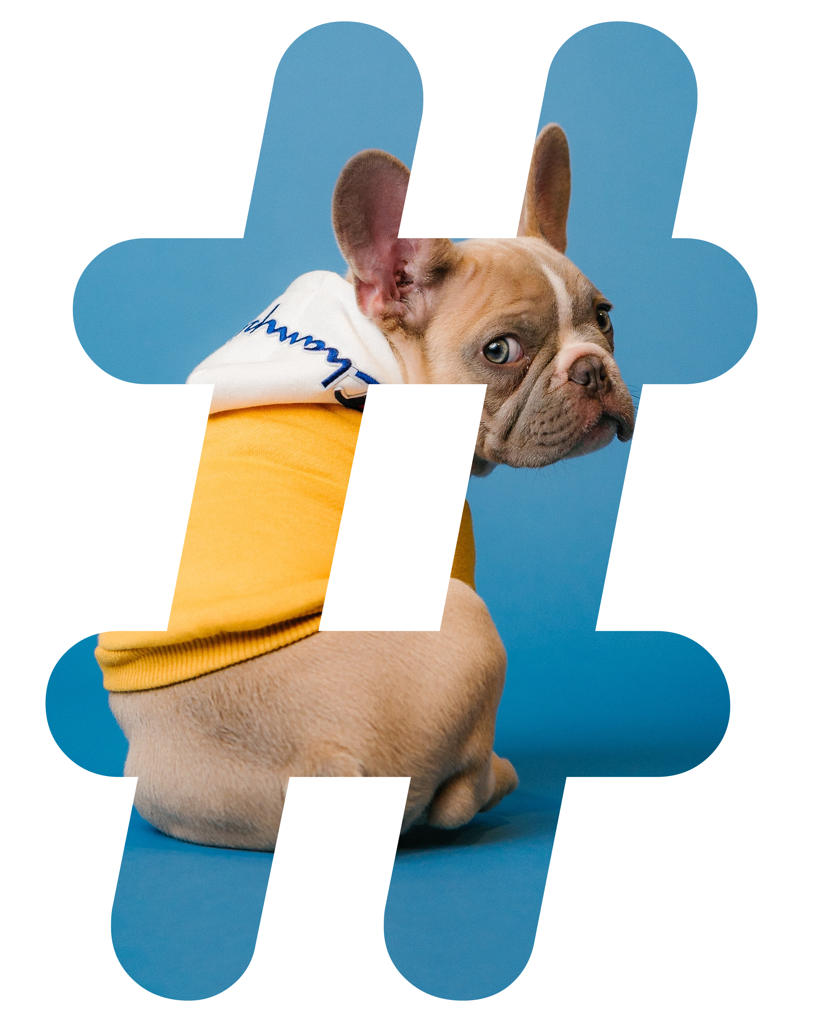 Pets related hashtags