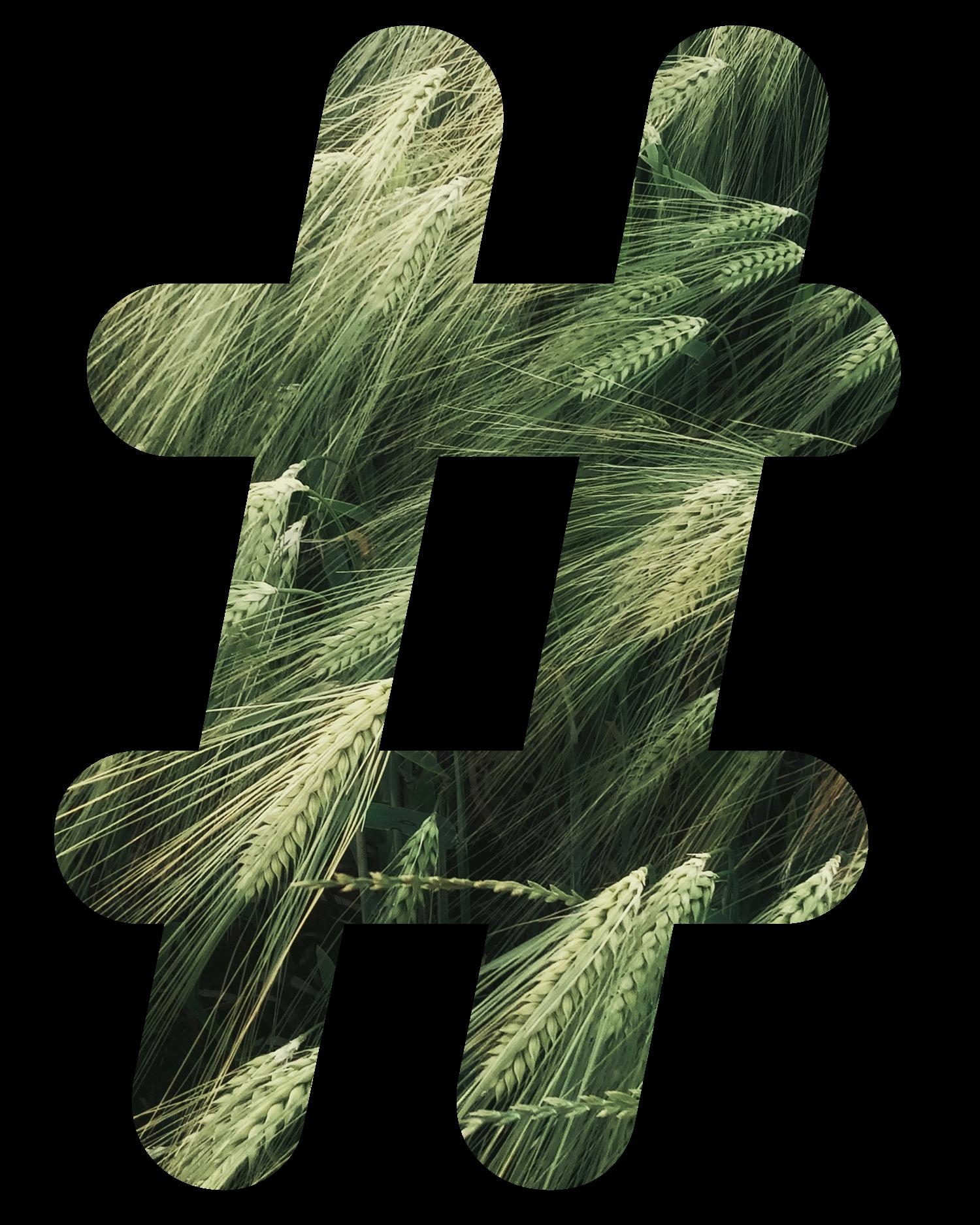 nature hashtags