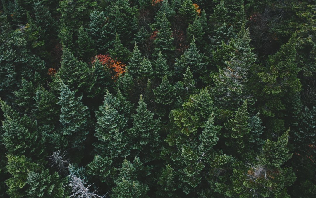 Evergreen content and how it can help you to plan your content