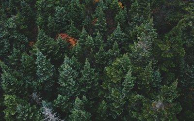 Qué es un contenido Evergreen y cómo puede ayudar a tu planificación de contenidos
